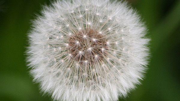 Ciaza alergiczki