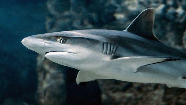 Rekin zaatakowal chlopca dziewczynke