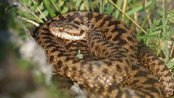 Zachecali dziecko zmija