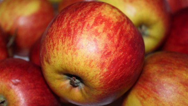 Jablko niemowle