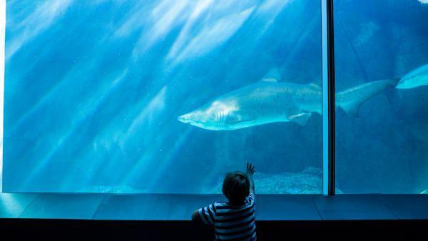 10latek rekin