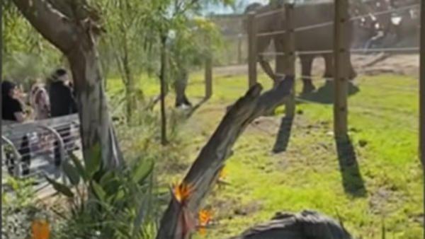 2letnie dziecko wybieg slon