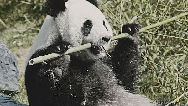 Dziecko wpadlo zagroda pand