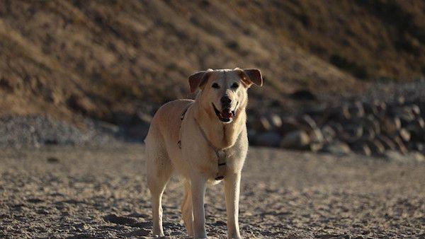 Pies ocalil dziecko zakopane