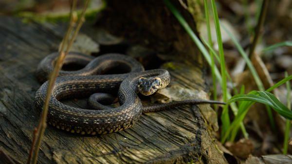 Uwaga na zmije