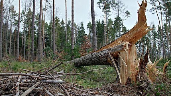 Zlamane drzewo