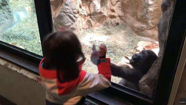 Zabawa dziewczynka goryl