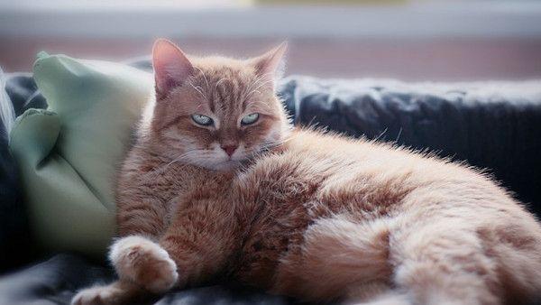 8latek bezdomne koty