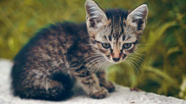 9latek oszczednosci ranny kotek