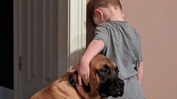 Dziecko w kacie pies