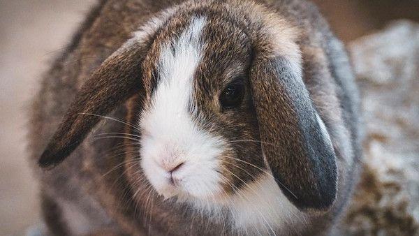 Dziecko zajac