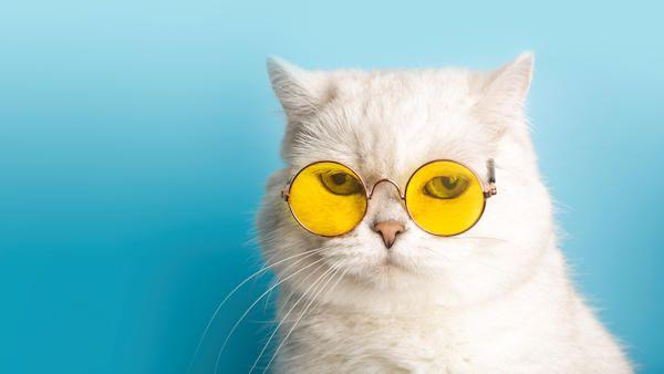 Kot okulary