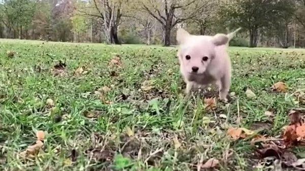 Pies amputowane lapki