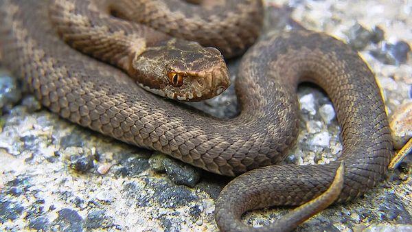 Dzieci pokasane zmija