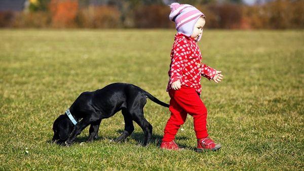 Male dziecko zwierze