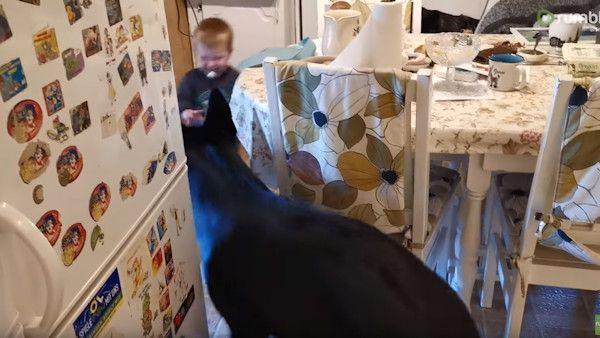Dziecko berek pies