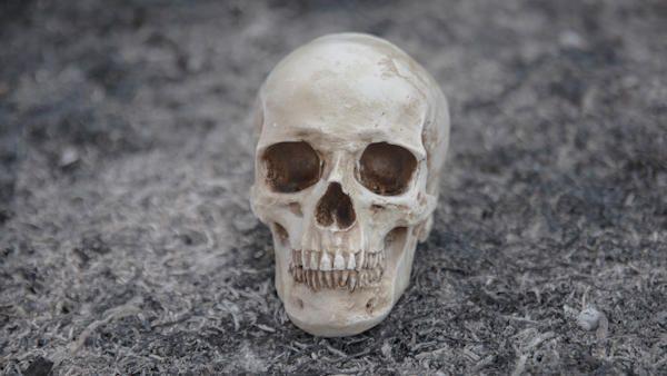 Dziecko znalazlo ludzka czaszke