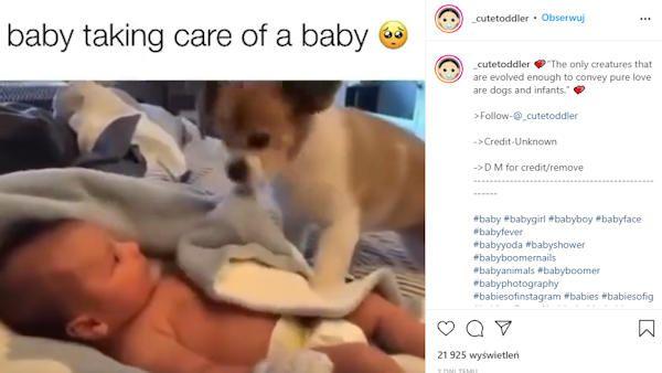 Pies okrywa dziecko kocem