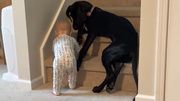 Pies zabezpieczyl dziecko